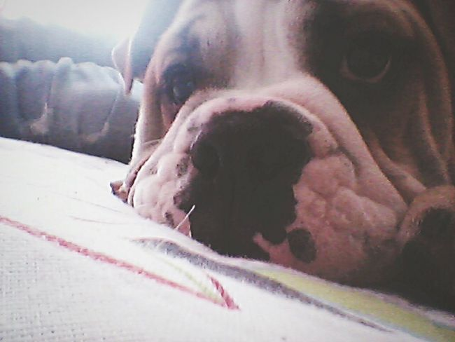 Guille :3