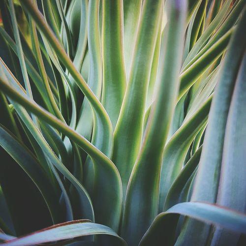 Plants 🌱 Plants Leaves Leaves🌿 Close Up Nature Closeup Nature Photography Nature Maximum Closeness