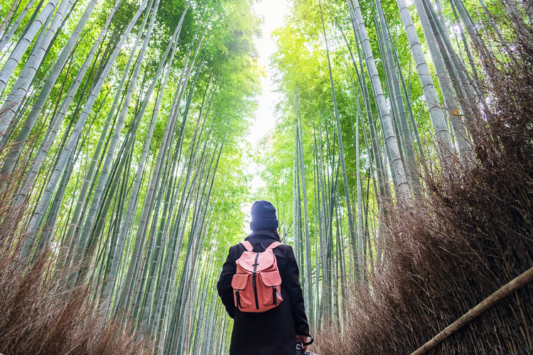 Rear view of woman with backpack standing in forest