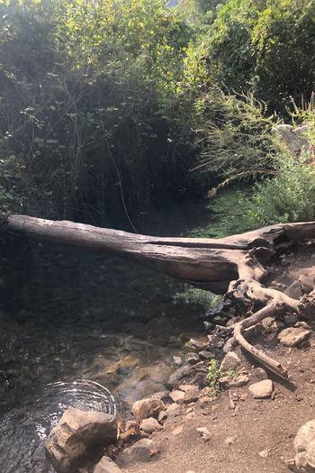 Fallen tree by stream in forest