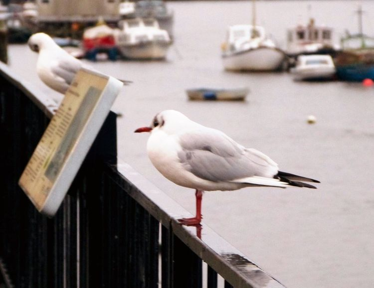 Outdoors No People Boats River Birds Birds On The River Outdoor Photography Seagulls Quayside
