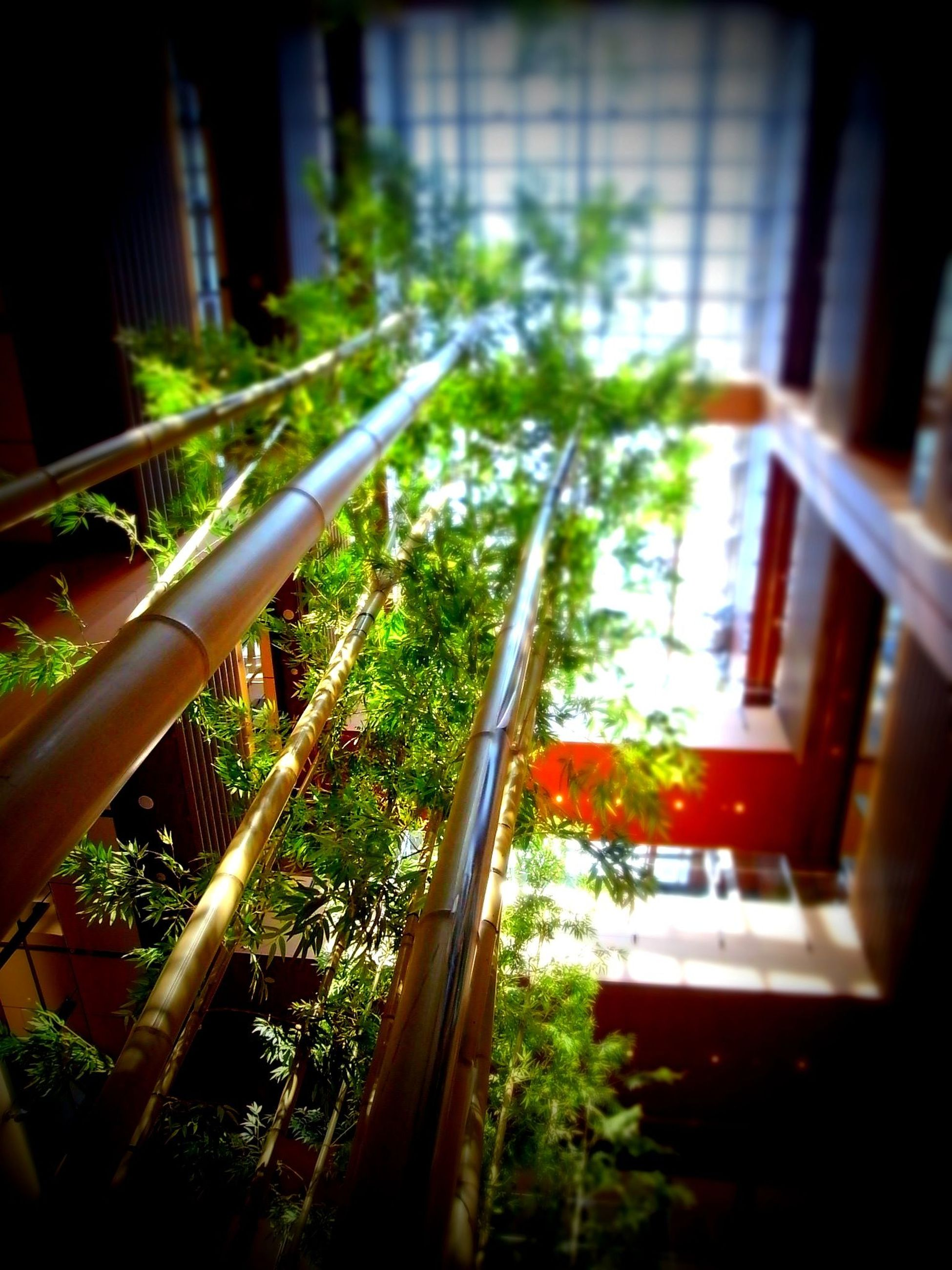 window, plant, growth, indoors, built structure, potted plant, architecture, house, building exterior, glass - material, sunlight, front or back yard, tree, green color, day, balcony, no people, nature, leaf, window sill