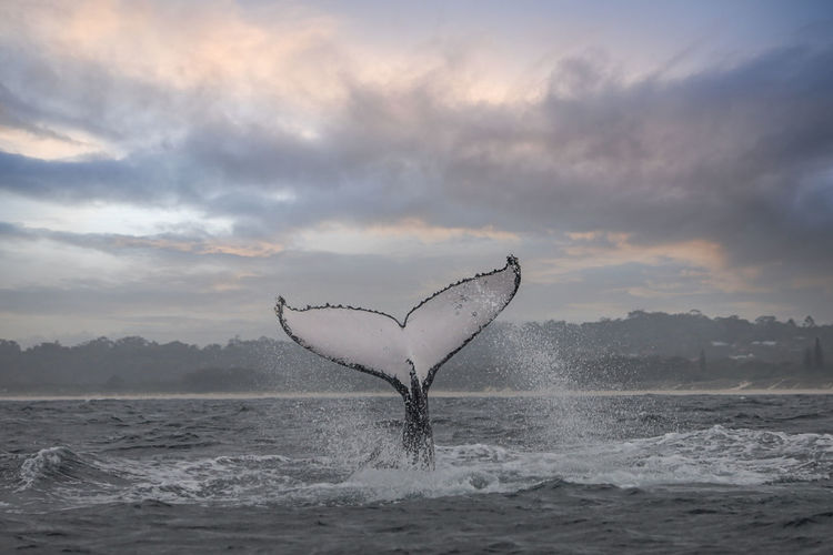 Tale of a whale in open water