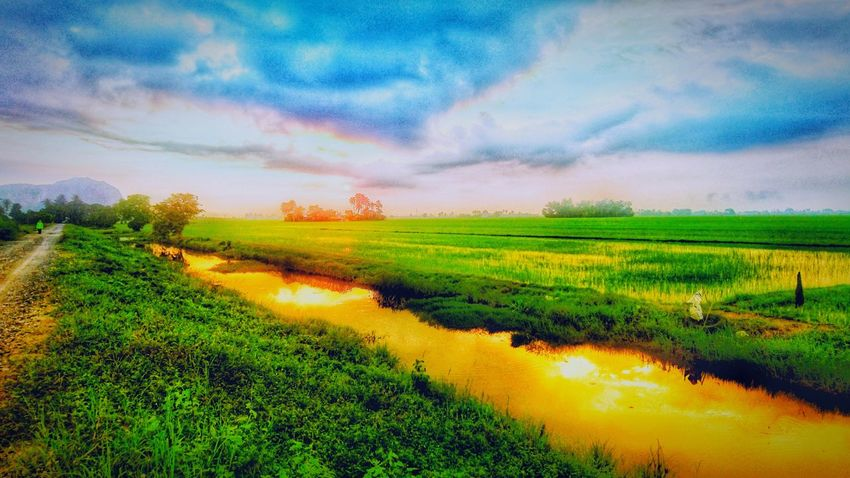 Rice Fields And Water ☀ Sunrise