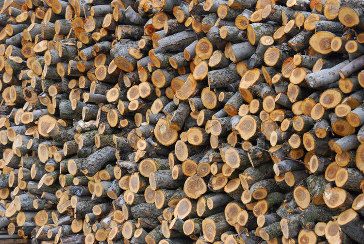 New Jersey Winter Abundance Backgrounds Close-up Day Deforestation Forestry Industry Full Frame Heap Large Group Of Objects Log Lumber Industry New Jersey Photography No People Orchard Stack Team Timber Wood - Material Woodpile