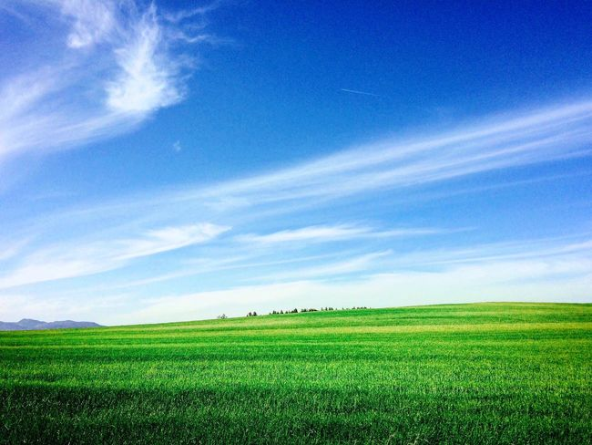 The whole world would be too small for us • • • Field Agriculture Landscape Nature Green Color Beauty In Nature Farm Growth Sky Rural Scene Tranquil Scene Crop  Blue Scenics Tranquility Grass No People Outdoors Day Rice Paddy Windows XP Windows Xp