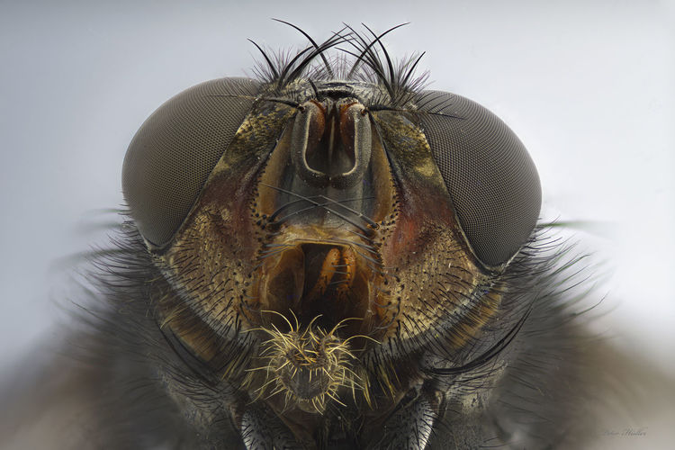 Close-up portrait of an animal