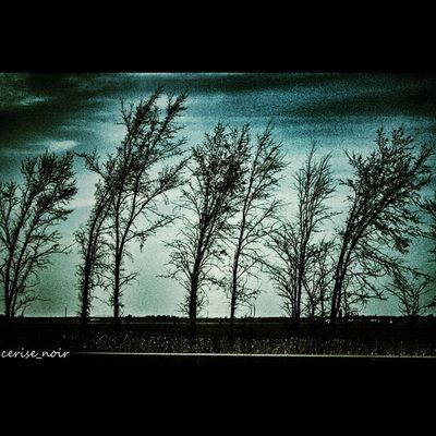 Igdungeon Rsa_trees Masters_of_darkness United_by_darkness Igd_realmofthedead