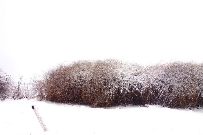 Bushes Cold Temperature Nature No People Outdoors Snow Snowing Weather Winter EyeEm Gallery Eyemphotography Eyemphotos Winter Tones