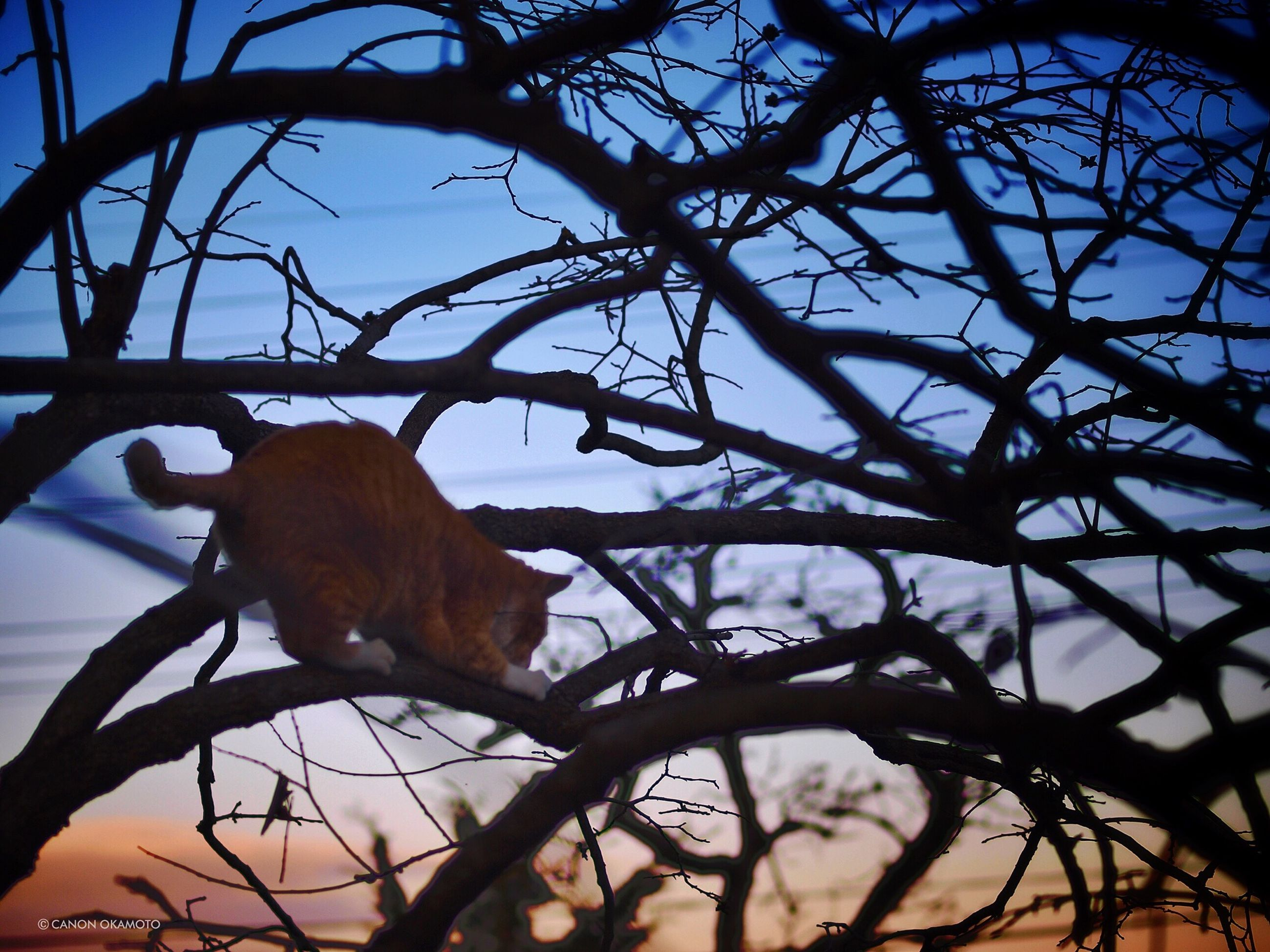 animal themes, mammal, domestic animals, one animal, pets, livestock, sunset, sky, zoology, vertebrate, brown, two animals, low angle view, tree, branch, nature, side view, horse, no people, wildlife