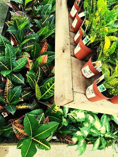 Growth Leaf Plant Green Color Freshness Nature Tropical Plants Venus Florida Georgia Home Depot