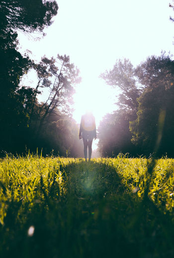 Beauty In Nature Day Field Flower Freshness Full Length Grass Growth Landscape Nature One Person Outdoors People Plant Real People Rear View Sky Standing Sunlight Tree Walking Yellow