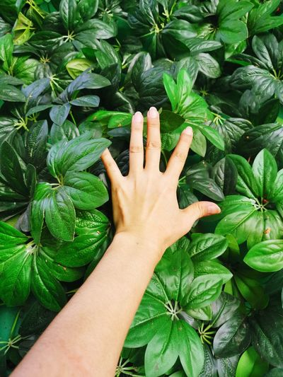 Cropped hand of person touching plants