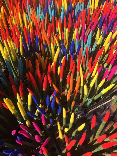 Arrows Multi Colored Full Frame Large Group Of Objects No People Abundance High Angle View Close-up Backgrounds Nature Decoration Outdoors Pattern EyeEmNewHere