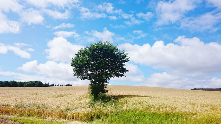 Taking Photos Hanging Out Hello World Photography Field Tree Scotland Countryside Country CountryLivinG Country Life