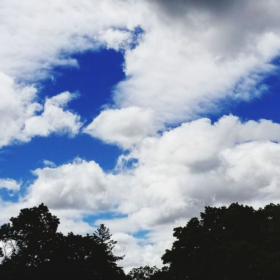 Tree Cloud - Sky Nature Sky Day Outdoors No People Beauty In Nature Low Angle View Forest Blue Beauty In Nature Scenics