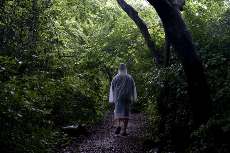 rainy day of Bijarim which is a famous forest in Jeju Island, South Korea Adult Bijarim Day Forest Full Length Growth JEJU ISLAND  Nature One Person Outdoors People Rainy Day Rear View Standing Tree Walking