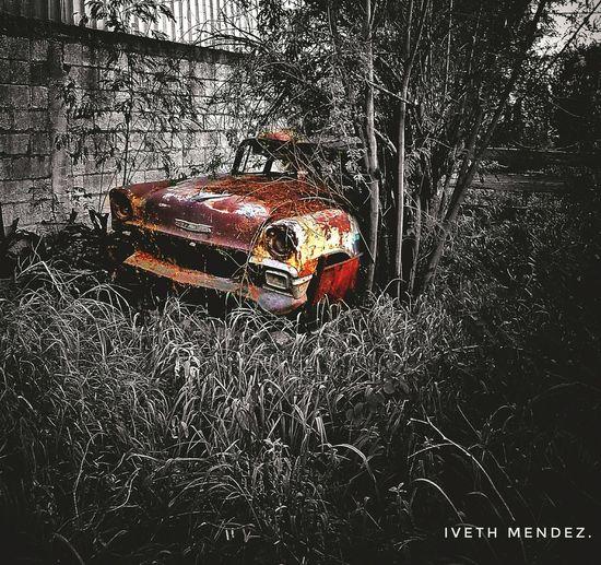 Mi carro antiguo favorito 💕. Car No People Day Mexico Byn Blackandwhite Colorplash Garden FotoDeHoy Edicion Antiguo Old Memories