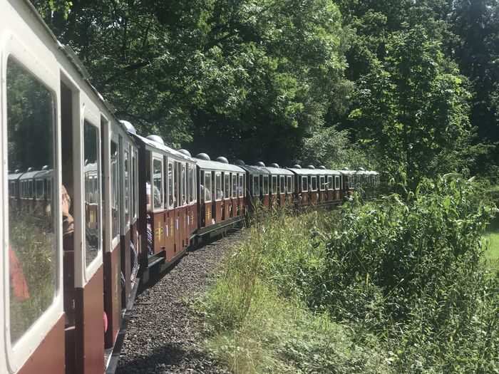 Train in forest