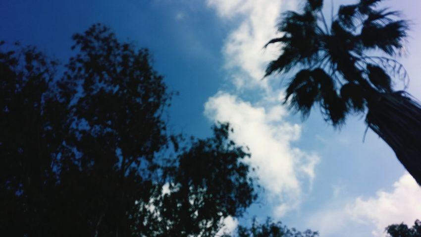 Photography Photo Photographer Photoshooting Debutante Street Walk Street Wall EyeEmNewHere EyeEm Best Shots Lovely Tree Blue Silhouette Sky Cloud - Sky Pine Tree Pinaceae Coniferous Tree Tree Canopy  Woods