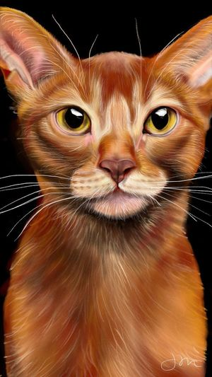 Always stay vigilant and curious like the cat. Catseyes Beautifulcat Catportrait Cat Cats Of EyeEm Cats Curious Catlover Catdrawing