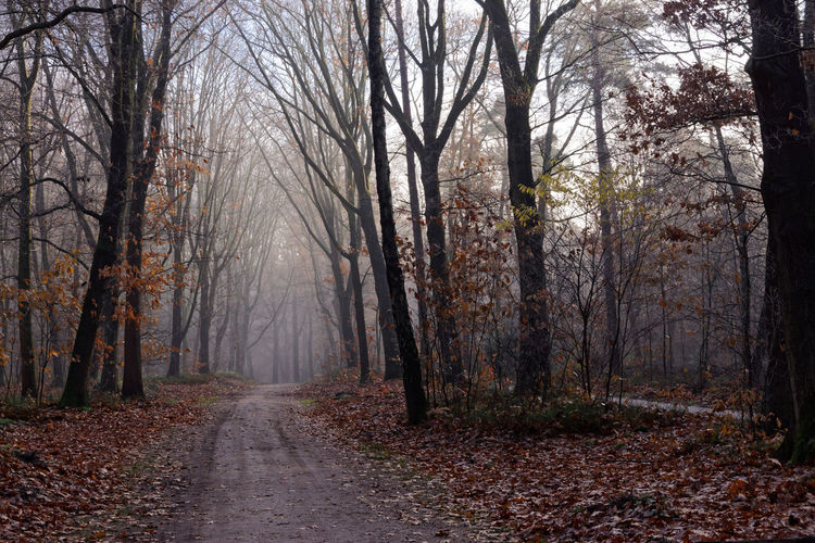 The Path Into the Forest Autumn Branch Branches Bright Color Colorful Flora Fog Forest Group Haze Leaves Mist Nature Path Sandpath Season  Together Tree Tree Trunk Trunk Walking Path Woods
