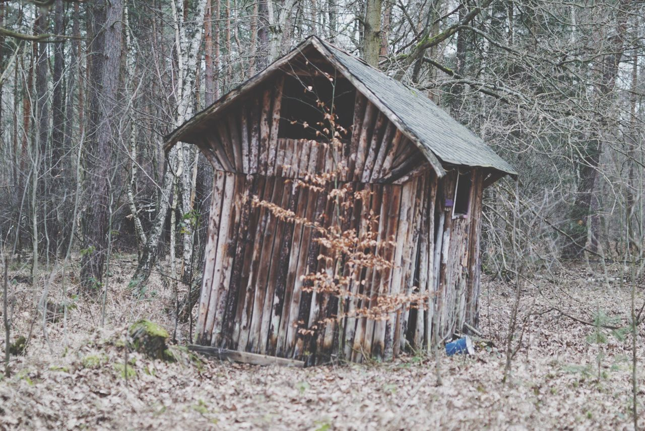 tree, wood - material, abandoned, built structure, forest, architecture, damaged, obsolete, house, old, run-down, wood, hut, tree trunk, building exterior, deterioration, nature, tranquility, wooden, day