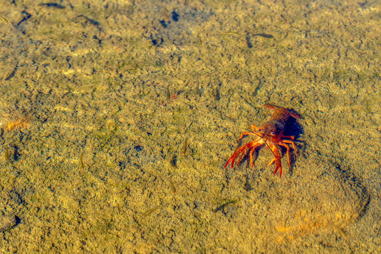 Animal Wildlife Animals In The Wild Animal Themes One Animal Animal Nature Crab No People Day Sea Land Sea Life Marine Crustacean Yellow Water High Angle View Outdoors Invertebrate Close-up