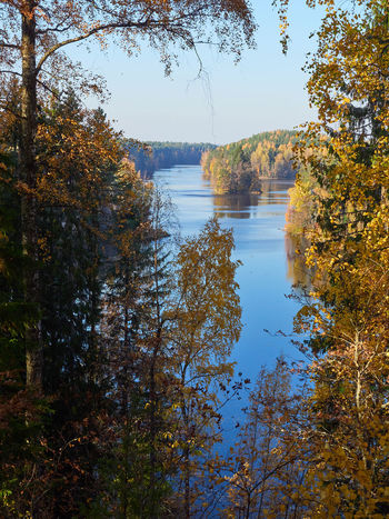 Peaceful lake view with fall colors in Finland. Tree Plant Water Autumn Tranquility Beauty In Nature Tranquil Scene Change Reflection Lake Scenics - Nature Nature Day No People Sky Non-urban Scene Growth Idyllic Outdoors Finland Lake View Autumn Lake Autumn colors Fall Colors Seasons