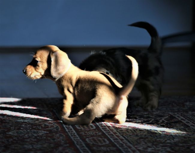 Animal Themes Day Dog Duchshund No People Pet Photography  Pets Puppies Shadows & Lights