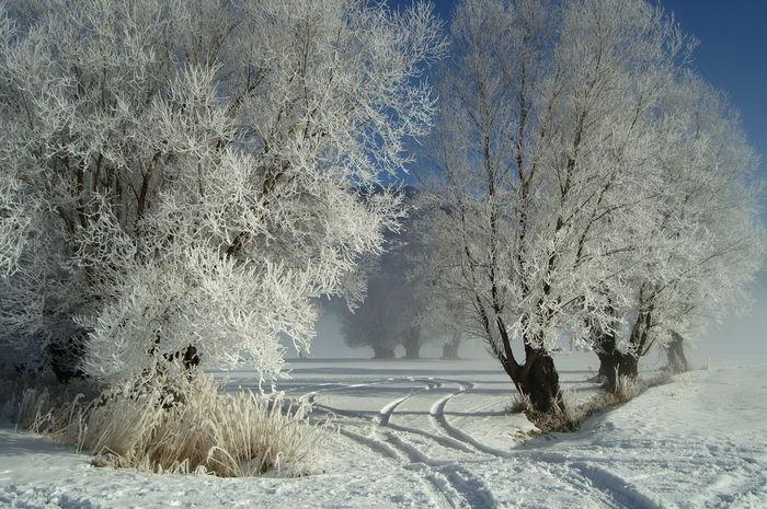 Schweiz Switzerland Wallis Leuk Schnee Snow Baum Trees Spuren Im Schnee Tracks In Snow Blue Sky Blauer Himmel Kalt Cold Cold Temperature Wintertime Winter Wonderland Winter Trees Winterwonderland