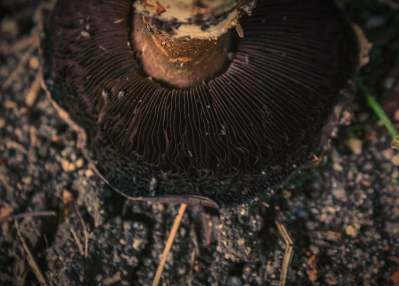 """""""Monthly mushroom mental meltdowns work miracles on the mind"""" (2017) Close-up Nature Photography Outdoor Photography Fungus Amungus Fungi Mushroom Caps Mushroom Mushrooms Mushroomphotography Mushrooms Gallery Day"""