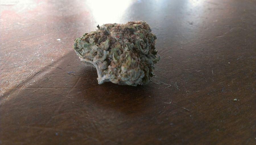 Pretty green bud