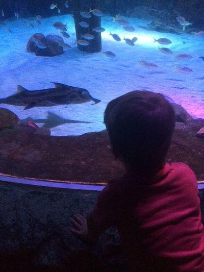 Fish Learning Exploring Aquarium Wonder