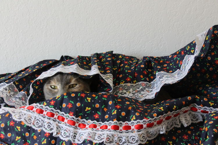 Cat Dress Hide-and-seek Hiding Pet
