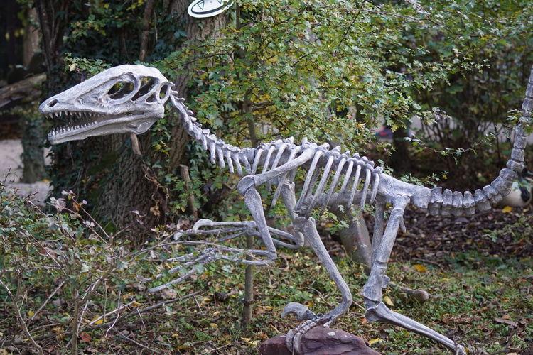Extinct Bones