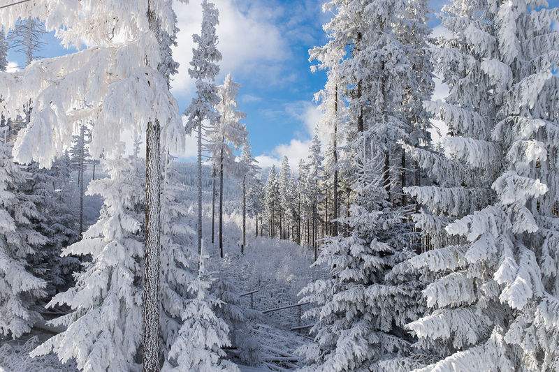 Beauty In Nature Cloud - Sky Cold Temperature Coniferous Tree Day Environment Forest Land Landscape Nature No People Non-urban Scene Outdoors Pine Tree Plant Scenics - Nature Sky Snow Snowcapped Mountain Tranquil Scene Tranquility Tree Winter WoodLand