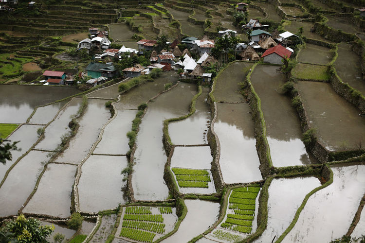 Water Nature High Angle View Rural Scene Reflection Day Agriculture Group Of People Architecture Field Environment Plant People Landscape Farm Rice - Cereal Plant Rice Paddy Outdoors Men Farmer Banaue Rice Terraces