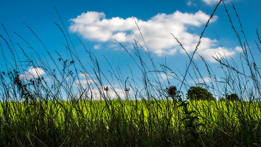 Agriculture Beauty In Nature Cereal Plant Cloud - Sky Crop  Day Field Grass Green Color Growth Landscape Nature No People Outdoors Plant Rural Scene Scenics Sky Tranquil Scene Tranquility