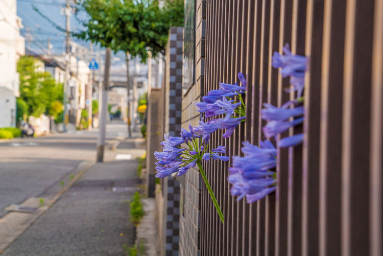 EyeEmNewHere Architecture Barrier Beauty In Nature Blue Building Exterior Built Structure City Close-up Day Flower Flower Head Flowering Plant Focus On Foreground Fragility Freshness Nature No People Outdoors Plant Purple Selective Focus Street Streetphotography Vulnerability  The Still Life Photographer - 2018 EyeEm Awards The Street Photographer - 2018 EyeEm Awards