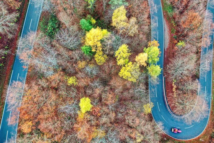 High angle view of plant by road during autumn