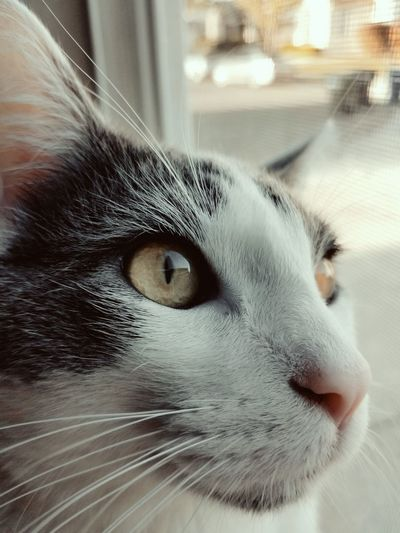 EyeEmNewHere Pets Portrait Domestic Cat Cold Temperature Feline Whisker Close-up Animal Eye Yellow Eyes Animal Nose Animal Face Cat