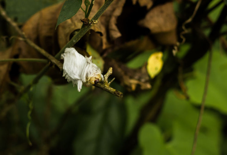 Close-up of white flowers on plant