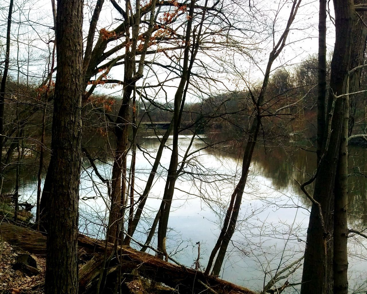 tree, tranquil scene, nature, tranquility, bare tree, water, branch, no people, day, forest, tree trunk, outdoors, river, scenics, landscape, beauty in nature, sky