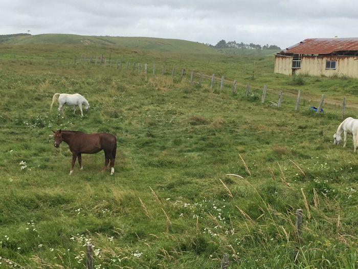 Animal Grass