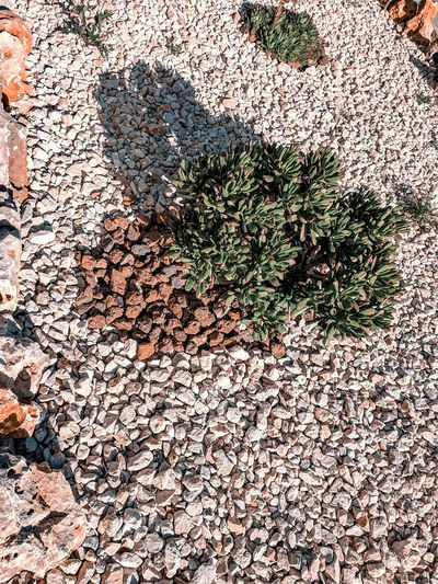 arid Garden Park - Man Made Space Garden Arid Climate Succulent Plant Pebble Stone Low Sun Crassula Backgrounds Full Frame Textured  Sunlight High Angle View Close-up Ground Young Plant Dry Detail