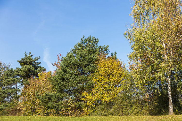Autumn Beauty In Nature Branch Change Clear Sky Day Freshness Green Color Growth Leaf Low Angle View Nature No People Outdoors Scenics Sky Tranquil Scene Tranquility Tree