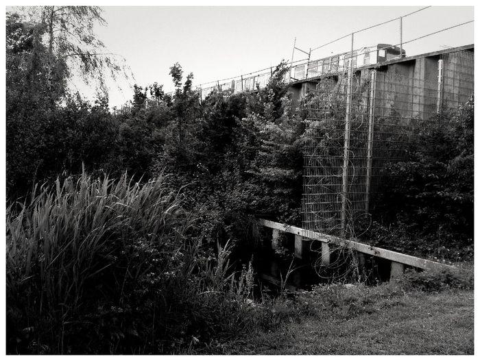 fenced yard Fenced Yard