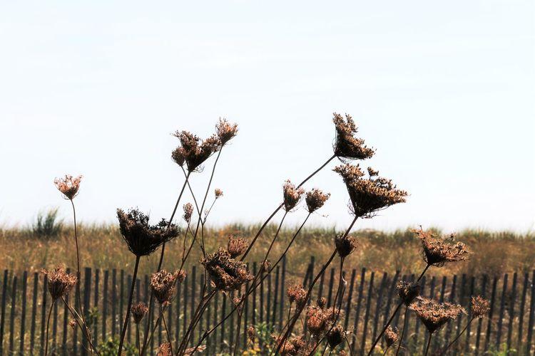 Flowers growing in field
