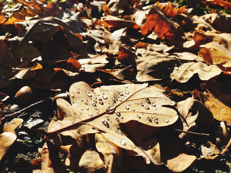 Leaf Autumn Change Dry Leaves Nature Backgrounds Outdoors No People Close-up Dew Dew Drops Maximum Closeness The Week Of Eyeem The Week On EyeEem Autumn Leaves Fall Beauty Fall Colors Authentic Moments Autumn Colors Fragility Beauty In Nature Day Still Life
